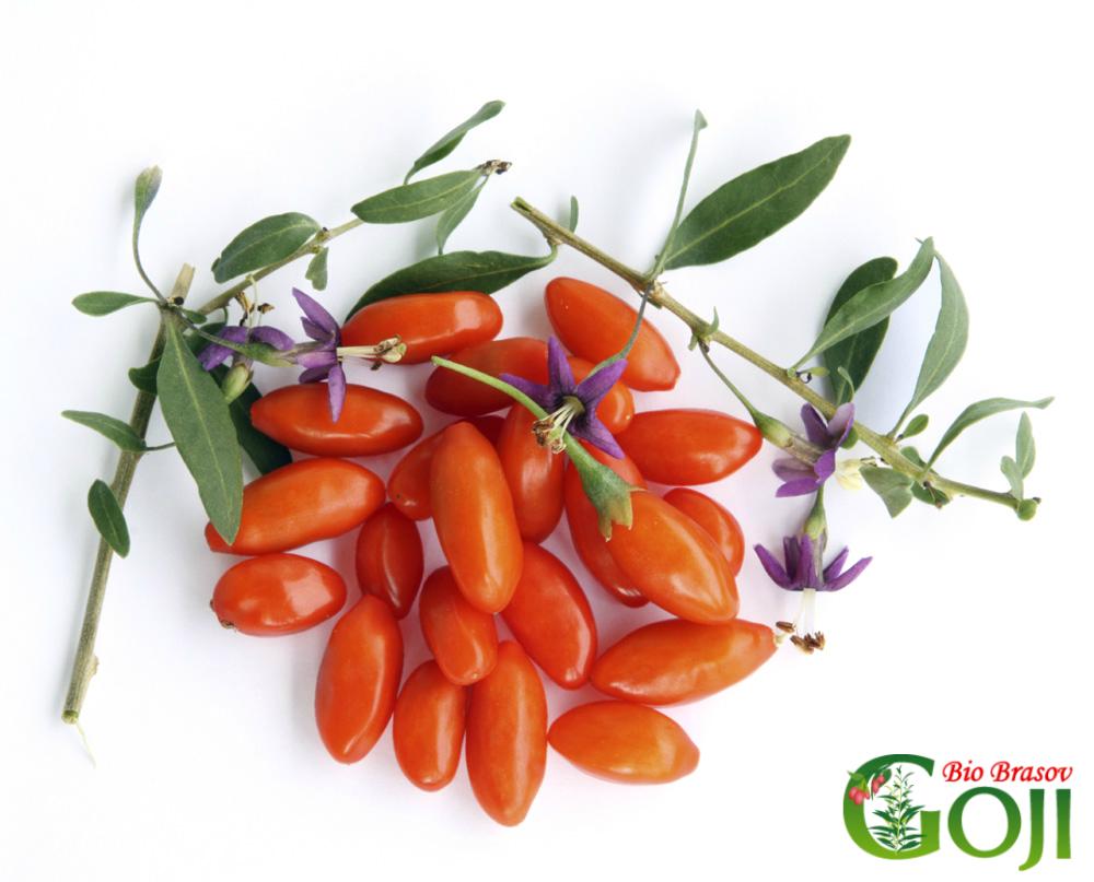 Fructe si plante goji bio