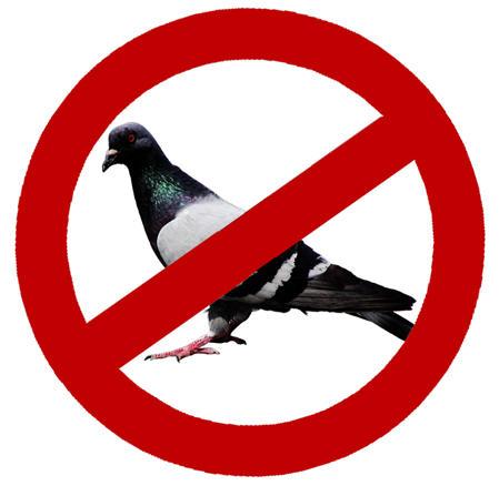 anti-porumbei