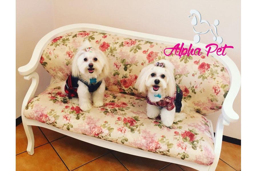 cosmetica canina Alpha Pet