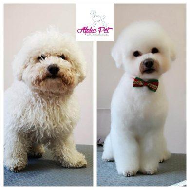 frizerie canina Alpha Pet